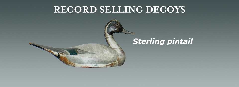 sterling pintail marquee