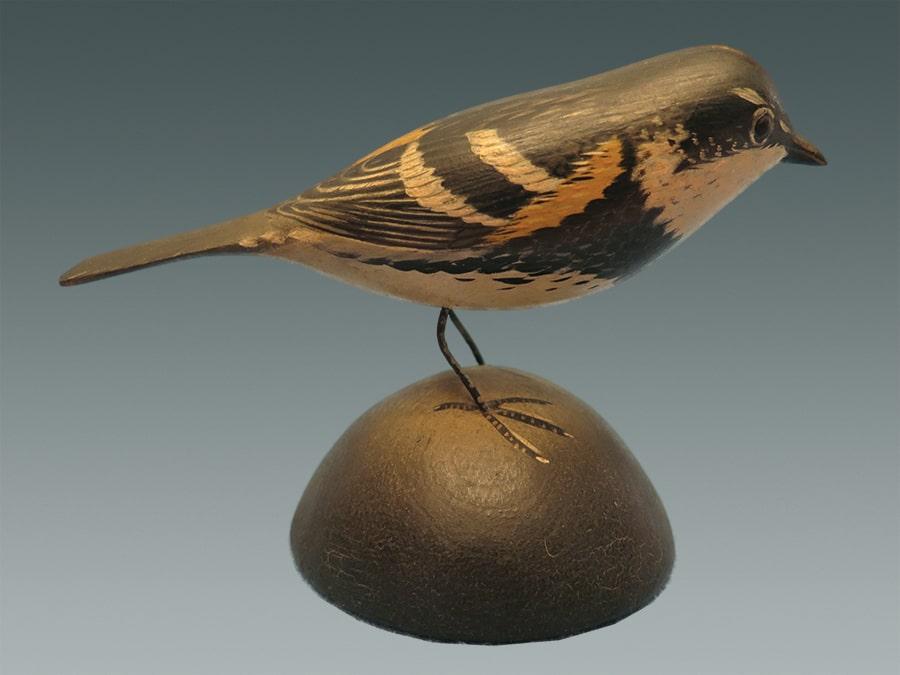 myrtle warbler-min
