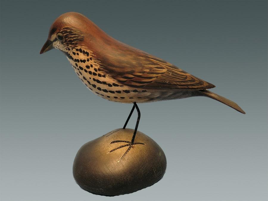 song sparrow-min