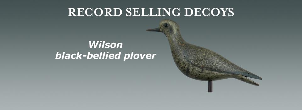 142 black bellied wilson plover