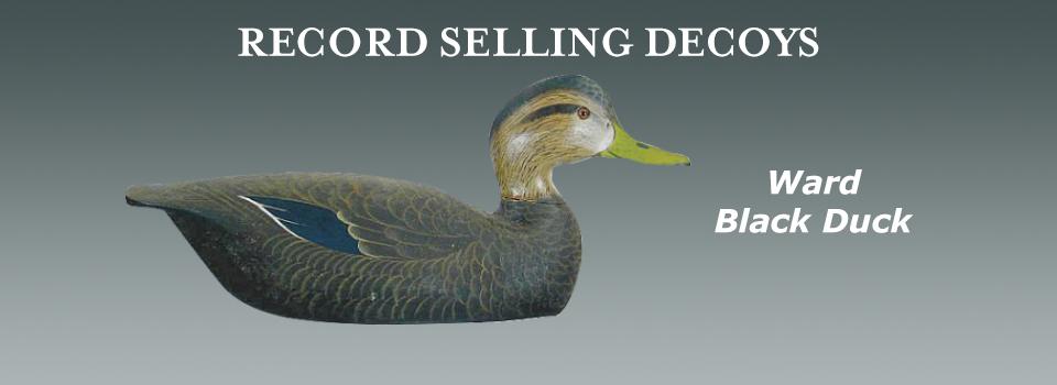 Ward black duck
